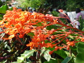 特別花:1915001685.jpg