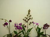 蘭花:1419940135.jpg