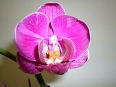 蘭花:1419940150.jpg