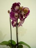 蘭花:1419940136.jpg