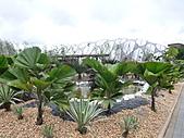 991214台北2010年世界花卉博覽會-花卉植物:P2460779.JPG