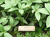 991214台北2010年世界花卉博覽會-花卉植物:P2460820.JPG
