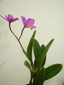 蘭花:1419940137.jpg