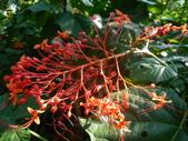 特別花:1915001687.jpg