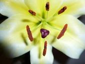 花瓣之美:1797083897.jpg