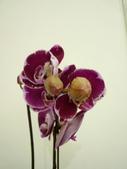 蘭花:1419940138.jpg