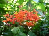 特別花:1915001688.jpg