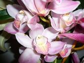 花瓣之美:1797083899.jpg