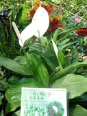 特別花:1915001701.jpg