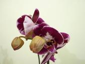 蘭花:1419940139.jpg
