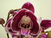 蘭花:1419940153.jpg