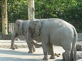 紅銀龍:大象3.JPG