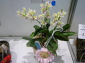 台北縣春季蘭花展990410:P2080648.JPG