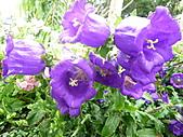 991214台北2010年世界花卉博覽會-花卉植物:P2460773.JPG