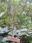 991214台北2010年世界花卉博覽會-花卉植物:P2460818.JPG