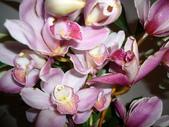 花瓣之美:1797083901.jpg