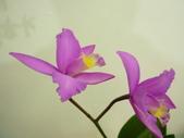 蘭花:1419940141.jpg