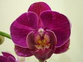 蘭花:1419940155.jpg