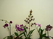特別花:P1120604.JPG