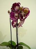 特別花:P1120608.JPG