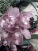 花瓣之美:1797083902.jpg