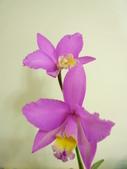 蘭花:1419940142.jpg