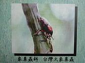動物昆蟲:台灣象鼻蟲.JPG