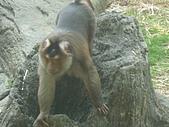 美猴王:猴王姿態.JPG