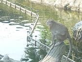 美猴王:猴王姿態10.JPG
