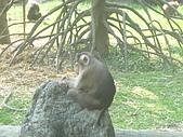 美猴王:猴王姿態11.JPG