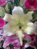 花瓣之美:1797083903.jpg