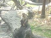 美猴王:猴王姿態13.JPG