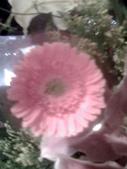 花瓣之美:1797083904.jpg