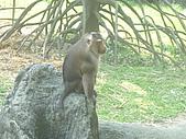 美猴王:猴王姿態14.JPG