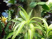 特別花:1915001693.jpg
