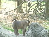 美猴王:猴王姿態2.JPG