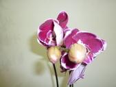 蘭花:1419940144.jpg