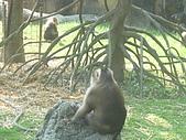 美猴王:猴王姿態3.JPG