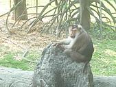美猴王:猴王姿態5.JPG