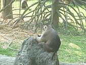 美猴王:猴王姿態6.JPG