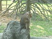 美猴王:猴王姿態7.JPG