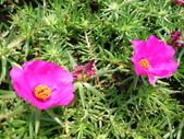 特別花:1915001694.jpg