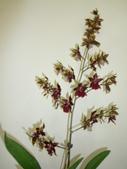 蘭花:1419940145.jpg