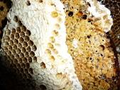 蜂蜜-土蜂蜜:1534964839.jpg
