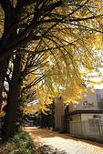 20161201-1206日本東京銀杏+河口湖富士山:IMG_7581.JPG