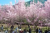 20130217武陵農場:DSCN2140.JPG