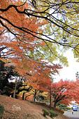 20161201-1206日本東京銀杏+河口湖富士山:IMG_7813.JPG