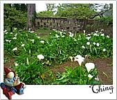 20100328-0329阿里山賞櫻:IMG_6896.JPG