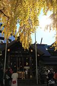 20161201-1206日本東京銀杏+河口湖富士山:IMG_7150.JPG