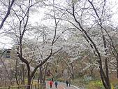 20180330-0410韓國賞櫻(下):P4080859.JPG